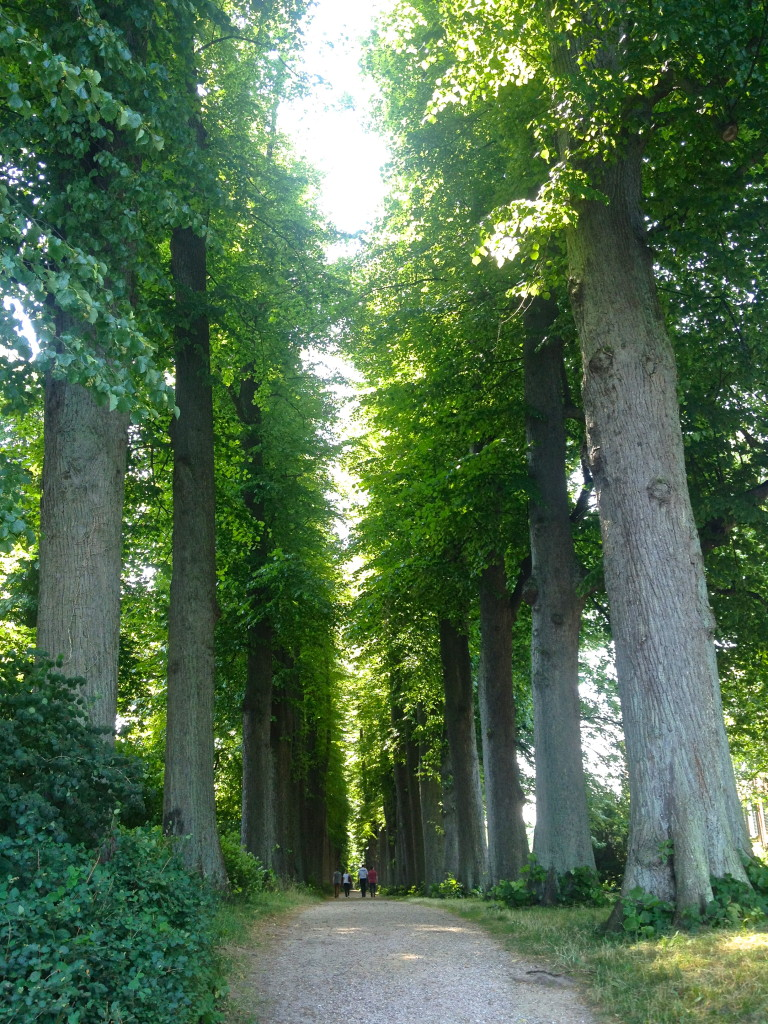 Linden Allee, on the Castle grounds. (Schloss Garten)