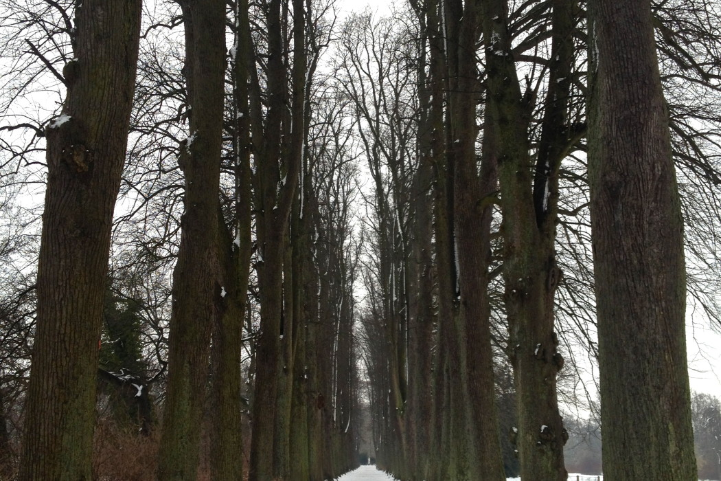 Linden Alley in the winter-time